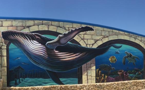 「海洋館」探索海地奧秘