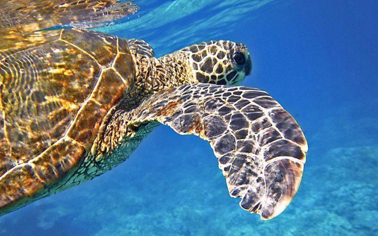 「龍蝦洞」「杉板灣」看海龜